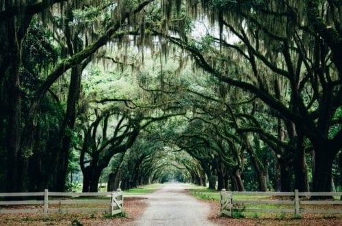 Savannah incentive trip